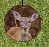 Deer Chewing Talking Round Wood Ornament With Photo by Koral Martin