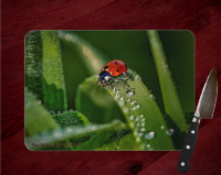 Lady Bug Glass Cutting Board 8x11 and 12x15 | Lady Bug Gathering Dew Drops Macro