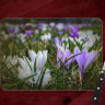 Crocus Floral Glass Cutting Board 8x11 and 12x15 | Spring Flowers Cheese Board