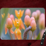 Monarch Caterpillar on Milkweed Photo Tempered Glass Cutting Board 8x11 and 12x15