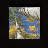 "Aspen Reach to Sky Close 6""  Tumbled Stone Trivet"