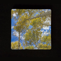 "Aspen Reaching to Sky 6""  Tumbled Stone Trivet"