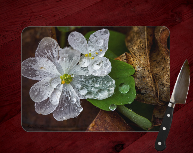 Rue Anemone with Transparent Petals Photo Tempered Glass Cutting Board 8x11 and 12x15  (1)