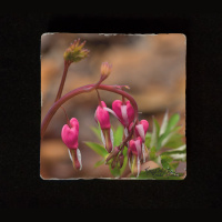 "Bleeding Heart Aspen Reaching to Sky 6""  Tumbled Stone Trivet"