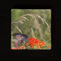"Butterfly on Milkweed 6""  Tumbled Stone Trivet"